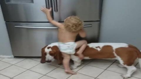 Верный четвероногий друг помог маленькой девочке добраться до холодильника
