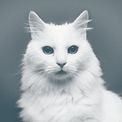 История эрмитажных котов