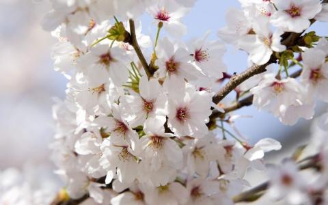 Язык и символика цветов
