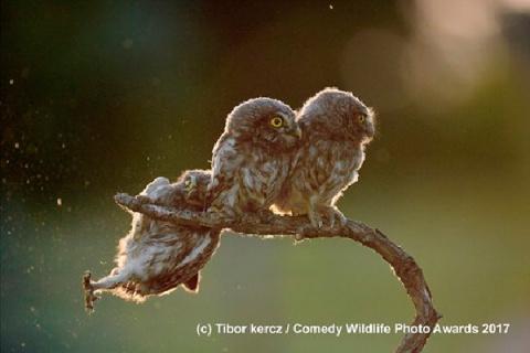 Забавные животные: Победители конкурса смешных фотографий дикой природы