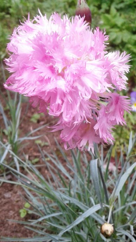 Цветы из розовой сказки — гв…