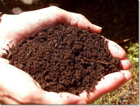 Почва – основа высокого урожая