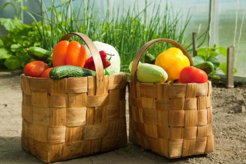 Сколько растений могут вас прокормить?