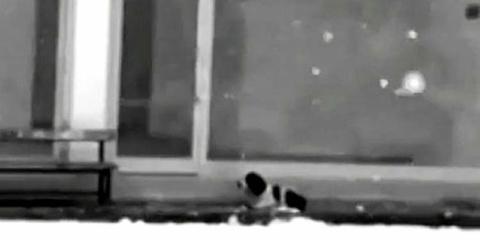 Собака замерзала на обочине……