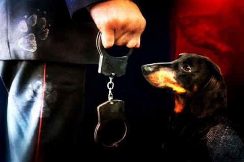 Хозяйку таксы осудили за то, что собака прикоснулась к брюкам полицейского