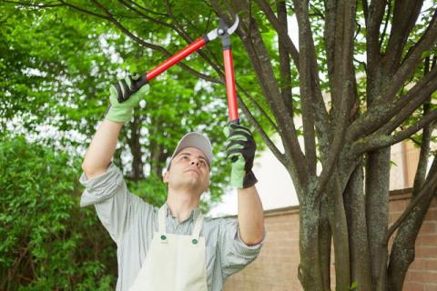 Обрезка и подкормка деревьев осенью