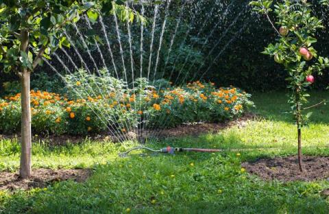 Как и когда поливать плодовый сад