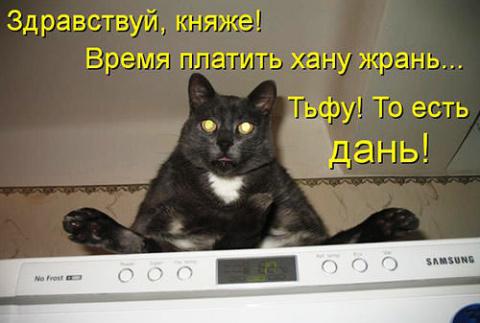 Кулинарные котоматрицы 14