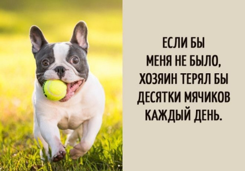 Вот о чём думают собаки!)
