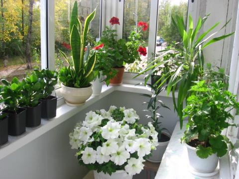 Хотите роскошный цветник в квартире? Вот вам 10 секретов