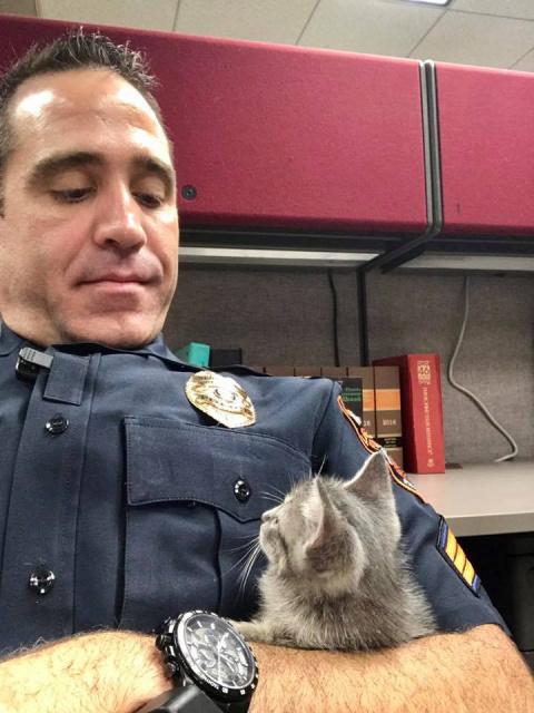 Полицейский всю ночь обнимал бездомного котёнка, чтобы спасти его от одиночества