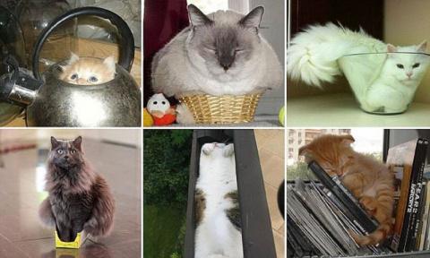 Коты, которые способны вздремнуть где угодно (34 фото)