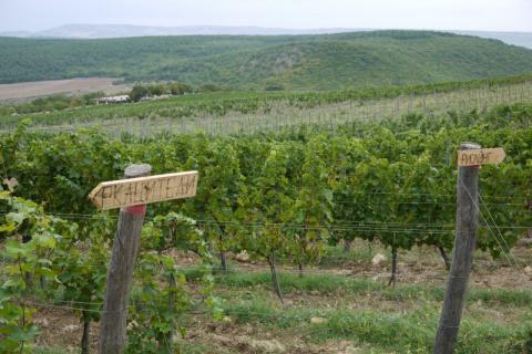 Правила крымских виноделов
