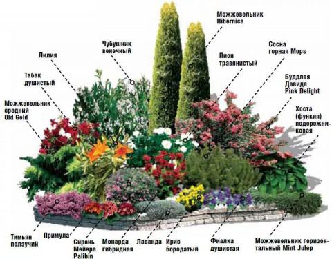 Клумбы непрерывного цветения…