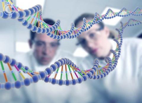Изменение одного гена продлит жизнь человека на 20%