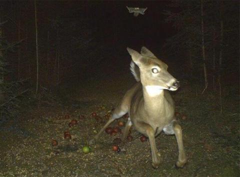 Фотоловушки в лесу: чем дейс…