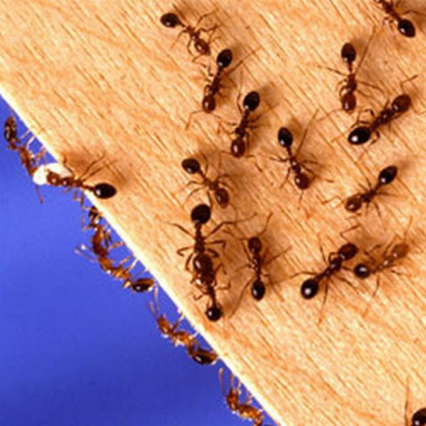проверенное средство от паразитов в организме человека