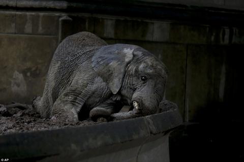 Грустные животные в зоопарке Буэнос-Айреса, которых должны были переселить еще год назад