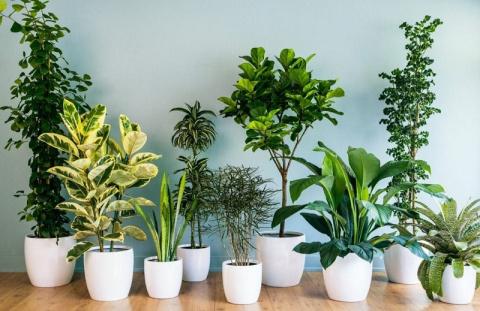 Система автополива растений от проводницы, подолгу отсутствующей дома