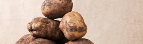 Картофель Лорх: описание сор…