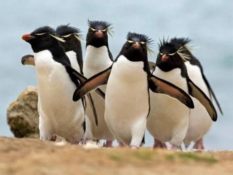 Удивительные животные — пингвины