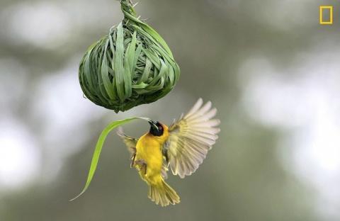 """Фотоконкурс National Geographic """"Фотограф года"""": лучшие в мире снимки живой природы"""
