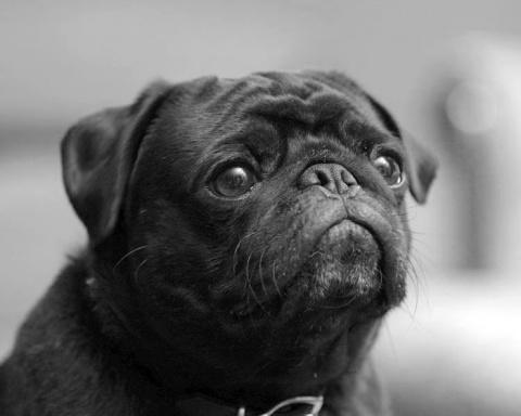 В Китае спасли 1000 собак, к…