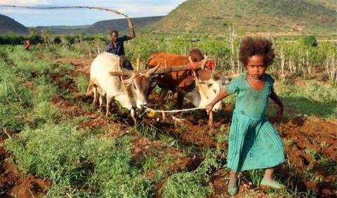 Утопия по-африкански: Эфиопс…