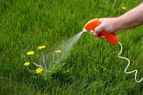 Как разумно применять гербициды на приусадебном участке