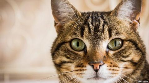 Как кошки покорили древний мир
