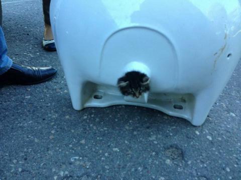 Место подвигу: пожарные спасли застрявшего в раковине котенка