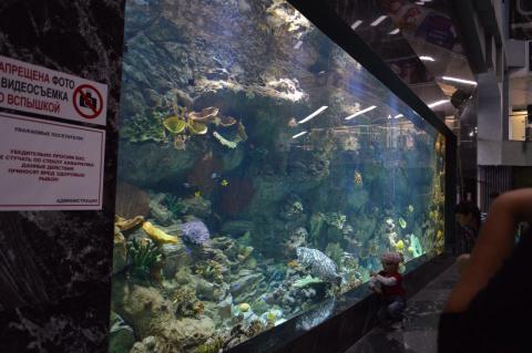 монастырь, мегагринн москва фото аквариум слезах расстаётся последней