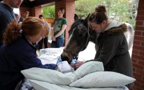 Лошадь посетила свою умирающ…