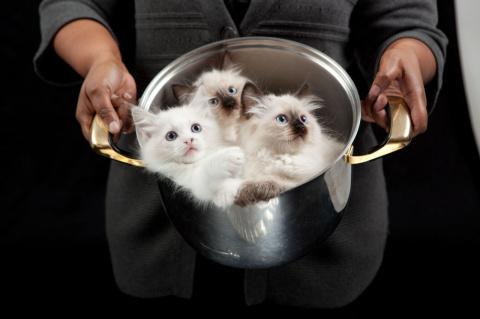 Суп с котом и пирожки с котя…
