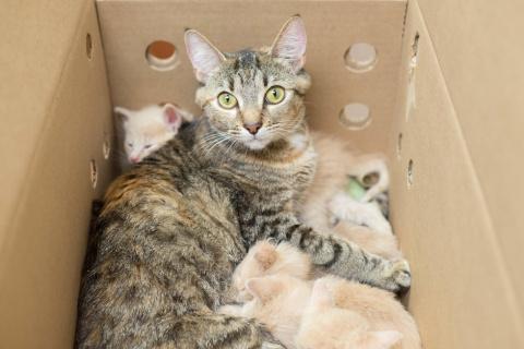 Мать-героиня кошачьего мира