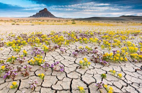 Как цветут пустыни