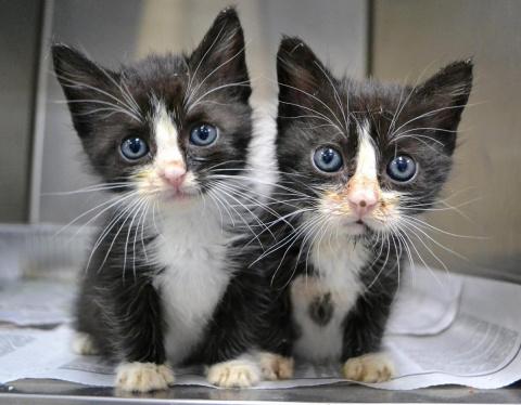 Почему один кот — хорошо, а …