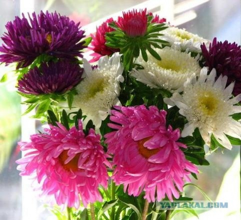 Доставка цветов в ереване для девочки 10 лет доставка цветов долгопрудный московская обл