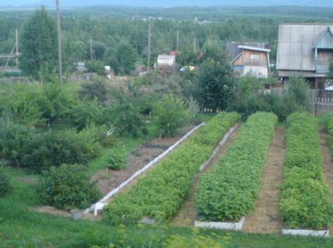 Самый удивительный огород. Такого ты точно никогда не видел!