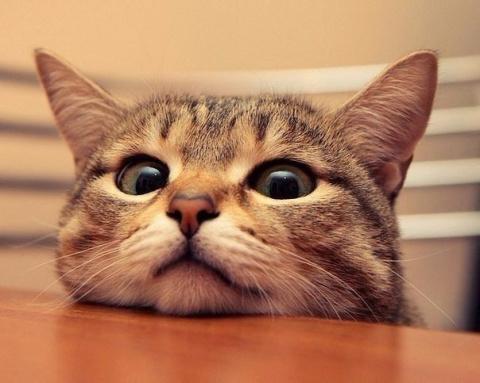 САМЫЙ ЛУЧШИЙ друг — это кот.…