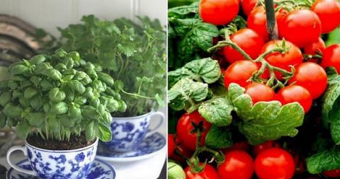 Вот как выращивать свежие зе…