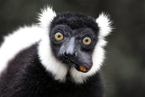 Монохромные костюмы в мире диких животных