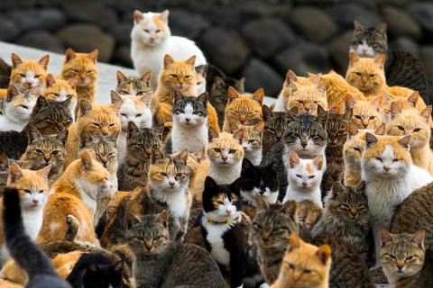 Все соседские коты сбегались ко мне