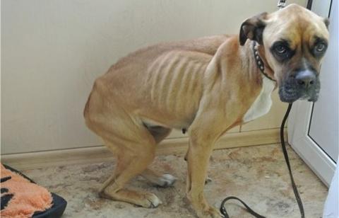 История одной собаки: путь от истощения до полного выздоровления