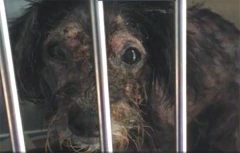 Невероятное превращение обиженной людьми собаки