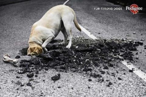 Реклама Pedigree - для сильных собак!