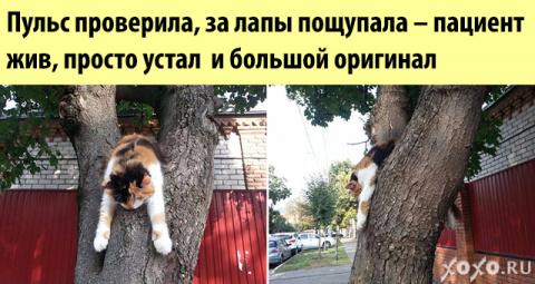 Такие забавные котики)