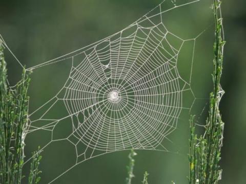 Как паукам удается натягиват…