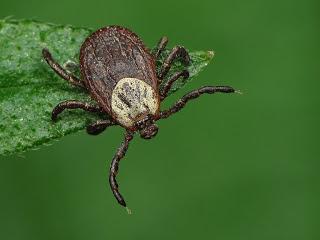Как уберечь себя от лесных насекомых