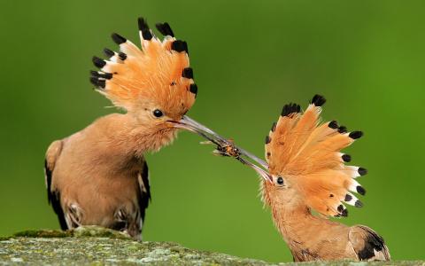 10 птиц с самыми необычными способами защиты. Тайны растений: они слышат, общаются и кричат